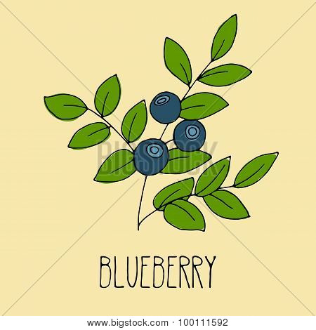 Hand drawing illustration of blueberry.