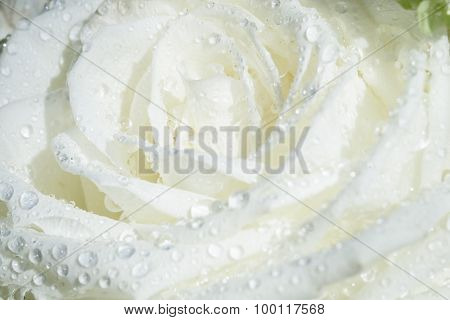 Details Of A White Flower With Water Drops Closeup