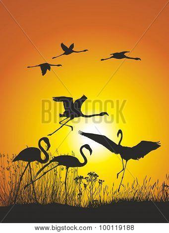 Flamingos on lake shore at sunset