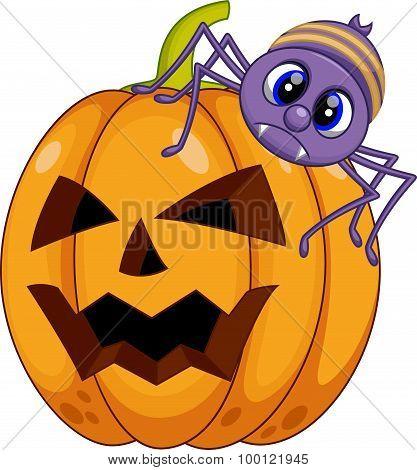 Pumpkin and spider cartoon