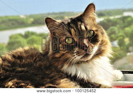 Nice Tabby Fluffy Cat Resting On A Windowsill