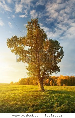 Lonely tree on the field in autumn in the morning