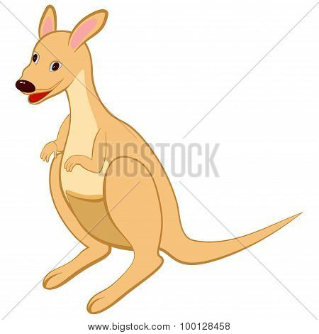 Funny Cartoon Kangaroo
