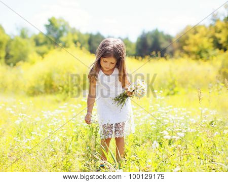 Little Girl Child On Meadow Picking Chamomiles Flowers In Sunny Summer Day