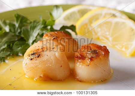 Fried Scallops With Sauce On A Plate Macro. Horizontal