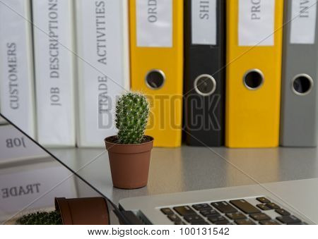 Office composition with cactus