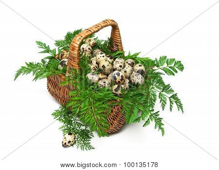 Basket With Quail Eggs Close-up Isolated On White Background