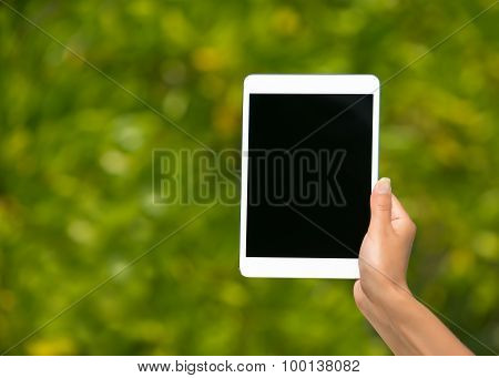 Concept Of Internet And Communication. Blank Empty Tablet Computer In The Hands Of Women On The Leaf