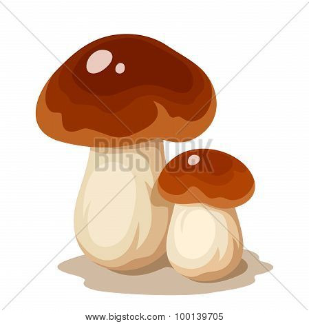 Two cep mushrooms. Vector illustration.