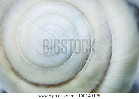 Spiral Seashell Background