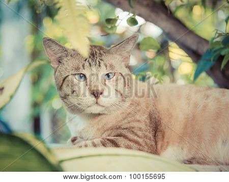 Cute Fat Snowy Cat Is Looking And Focusing Something In The Green Nature Surroundings In Vintage Ret