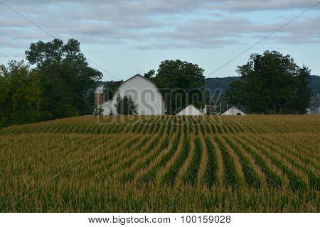 Farm field Barn