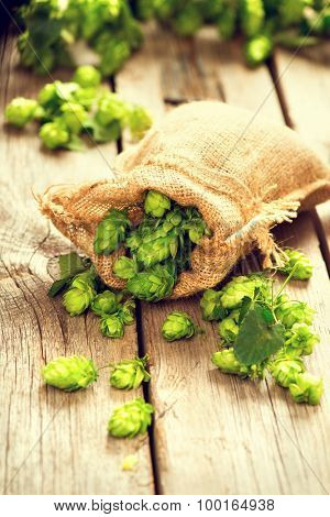 Hop in bag on wooden cracked old table. Brewing. Ingredient for brewing beer. Beauty fresh-picked hop cones closeup. Sack of hops on vintage background. Alternative medicine. Beer concept