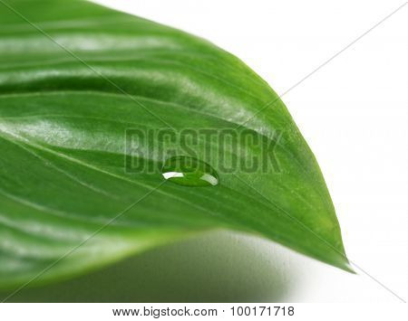 Green leaf with droplet isolated on white