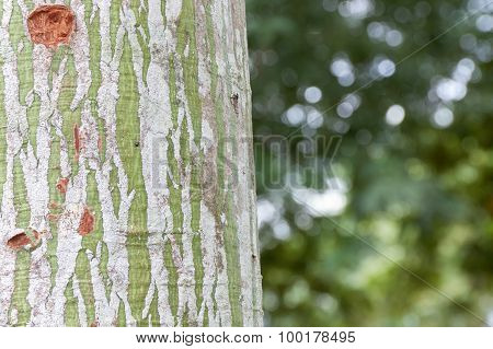 Bark Tree Green And White Stripes