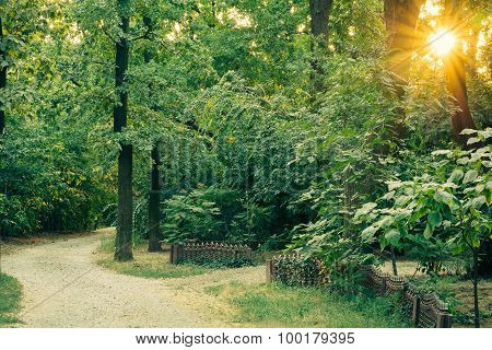 Access Gravel Road Among The Tall Lush Green Trees At Sunset