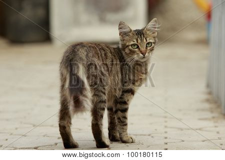Young Cat Looks Back