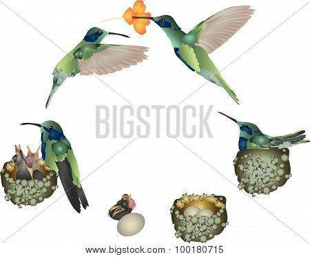 Life of hummingbird