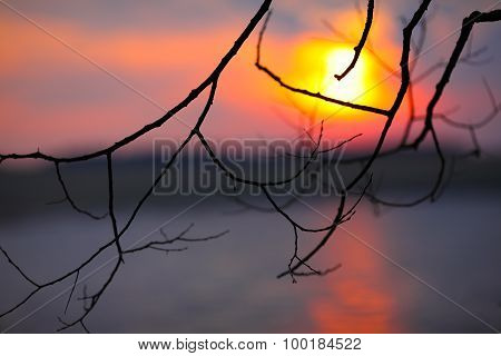 Leafless Branch Of Tree At Sunset