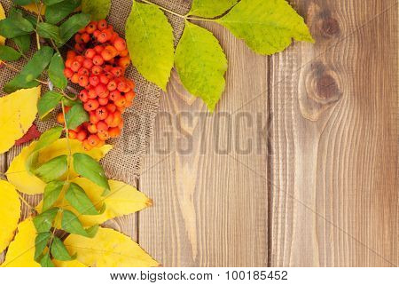 Autumn leaves and rowan berries over wood background with copy space