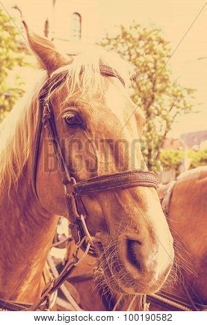 Portrait of a pair of draught horses