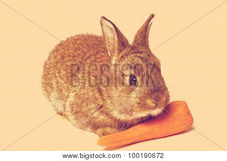 small rabbit with carrot