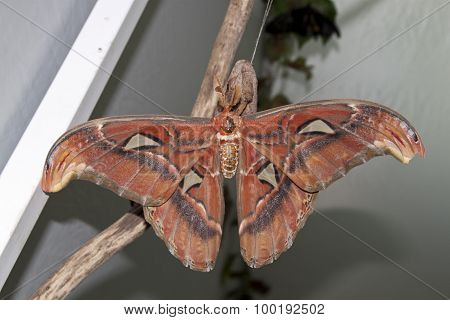rear of wild brown grey orange butterfly
