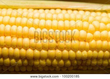 One Ear Of Corn On A  Surface