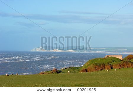 Sheep in the pasture over the English Channel