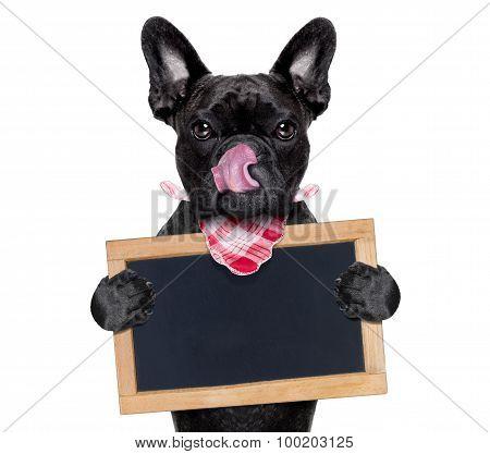 Hungry Dog   With Blackboard