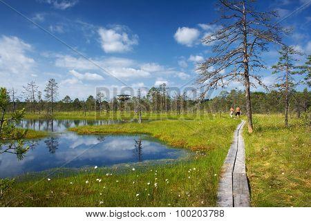 Viru bogs at Lahemaa national park