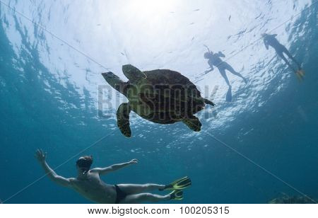 Group of friends snorkeling with the turtle