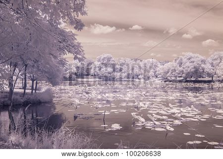 Infrared Photo  Pond Lotus In Public Park, Bangkok, Thailand