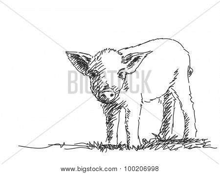 Pig Vector Sketch Hand drawn illustration