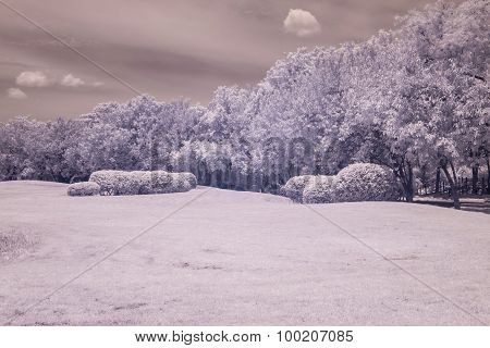 Infrared Photo Trees And Grass In Public Park, Bangkok, Thailand
