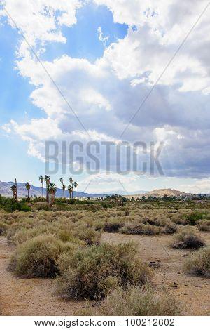 Joshua Tree Np Landscape