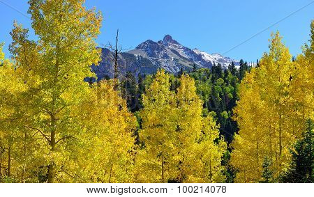 Yellow Aspen In The Alpine Scenery During Foliage Season