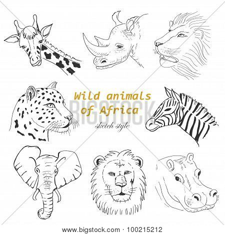 Set of wild animals of Africa in sketch style