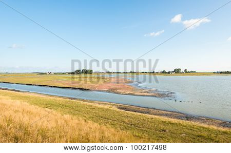 Nature Reserve With Wetland In The Summer Season