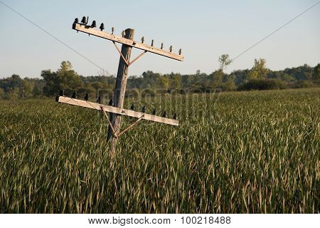 Old Telephone Pole