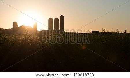Corn Farm Barn And Sunrise