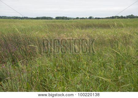 Sedge Meadow Wetland Overcast