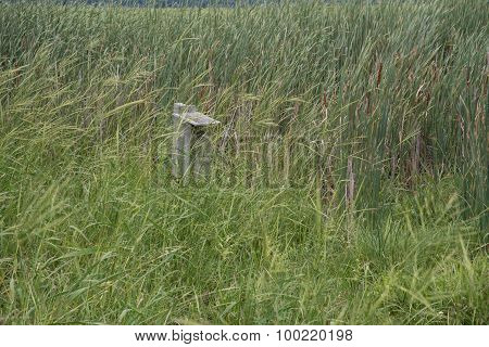 Wood Duck Box In Wild Rice
