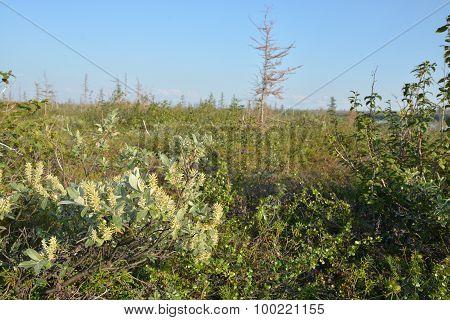 Tundra On The Taimyr Peninsula.