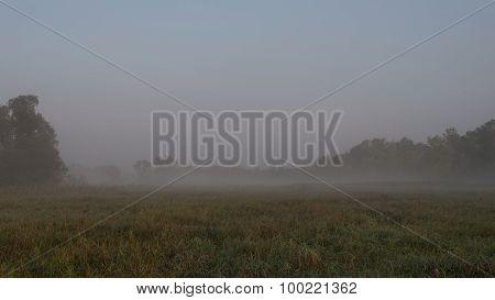 Canarygrass Marsh Fog