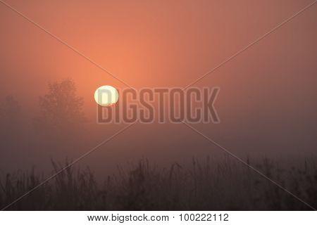 Sun Up Fog