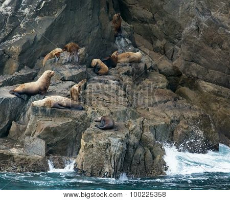 Sea Lions Resting On Rocks