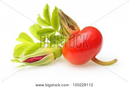 Rose hip with flower isolated on white background.
