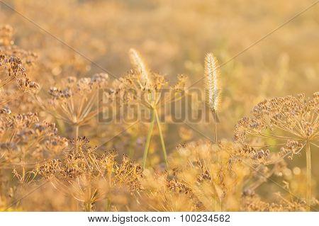Plants field in counterlight