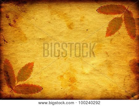 Paper With Autumnal Leaf